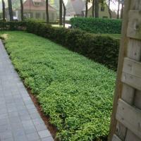 Tuinaanleg met tuinhuisje te Brugge - situatie voor